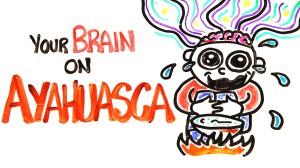 drug brain