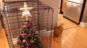 10-ways-to-survive-christmas-with-cats-dcsqbnstxek-480x270