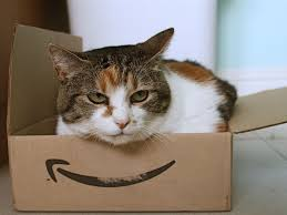 why-cats-love-boxes-so-much