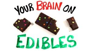Your Brain On Edible Marijuana