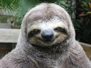 Why are sloths so slow