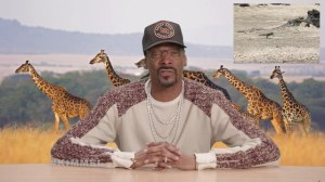 snoop-dogg-snakes-vs-iguana